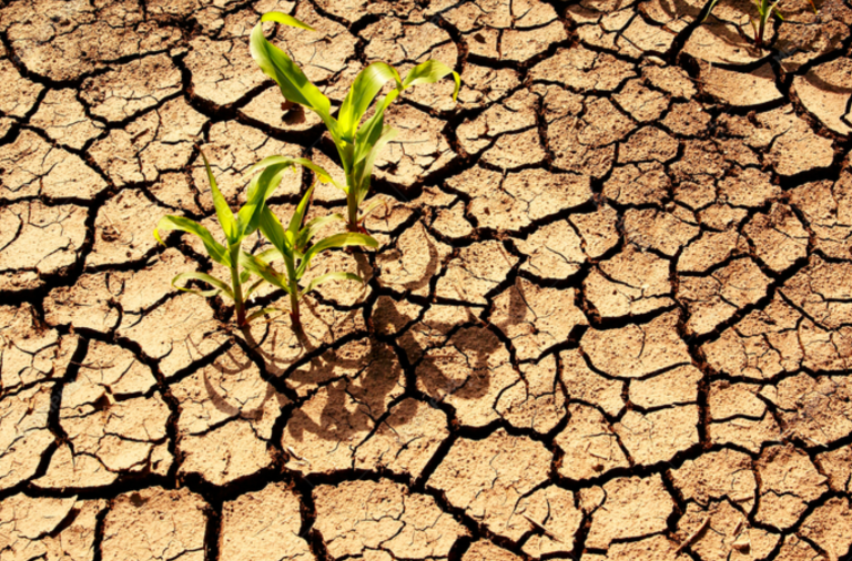 Upcoming Event: Webinar on Law and Policies for Strengthening Climate Resilience